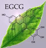 egcg-leaf